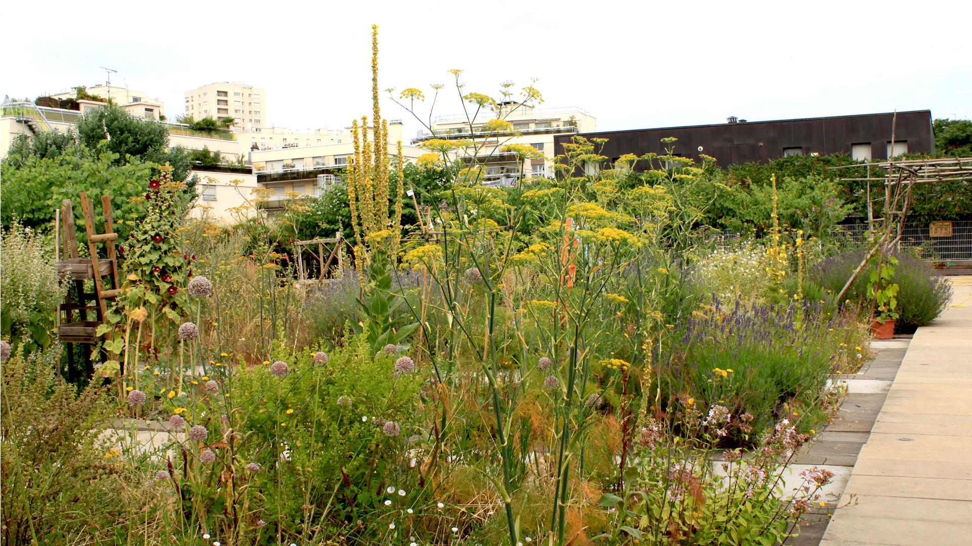 un jardin partag sur les toits paris xx me akebia cosyst mes. Black Bedroom Furniture Sets. Home Design Ideas