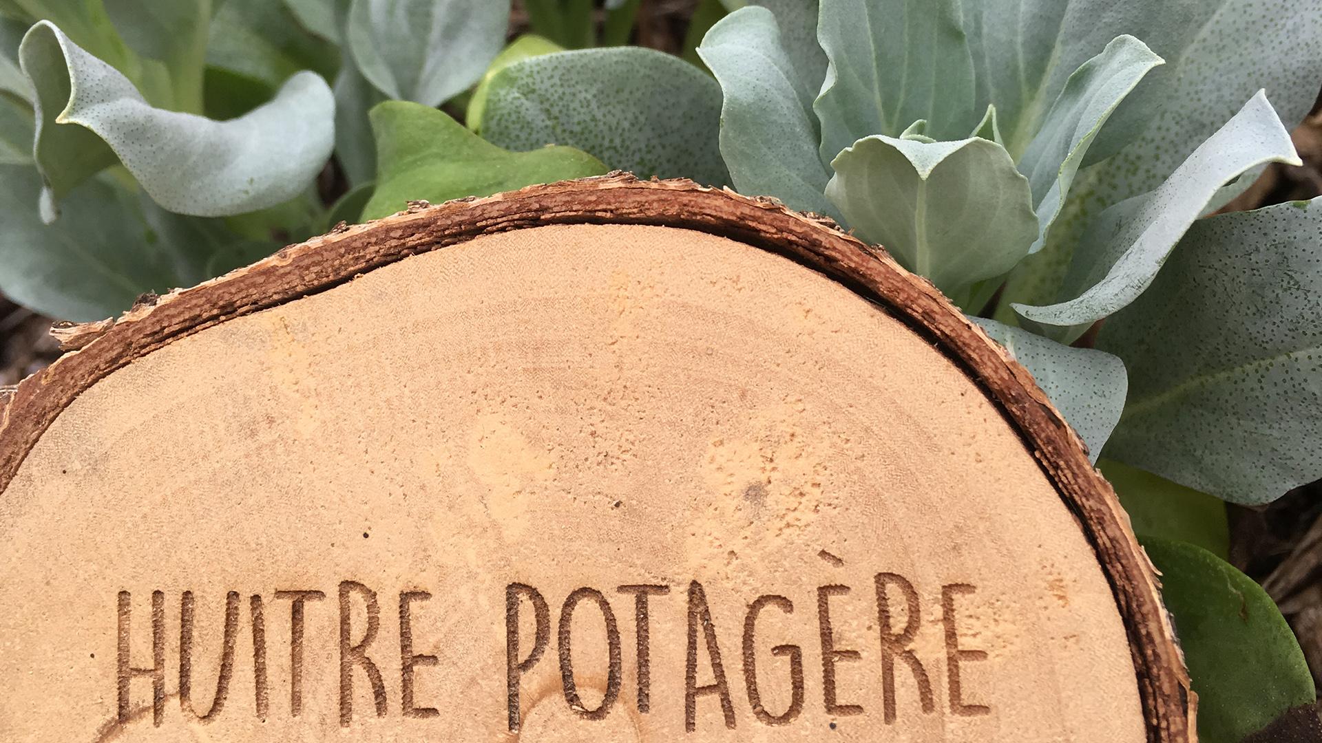 Fin de chantier et premières récoltes à Fronsac