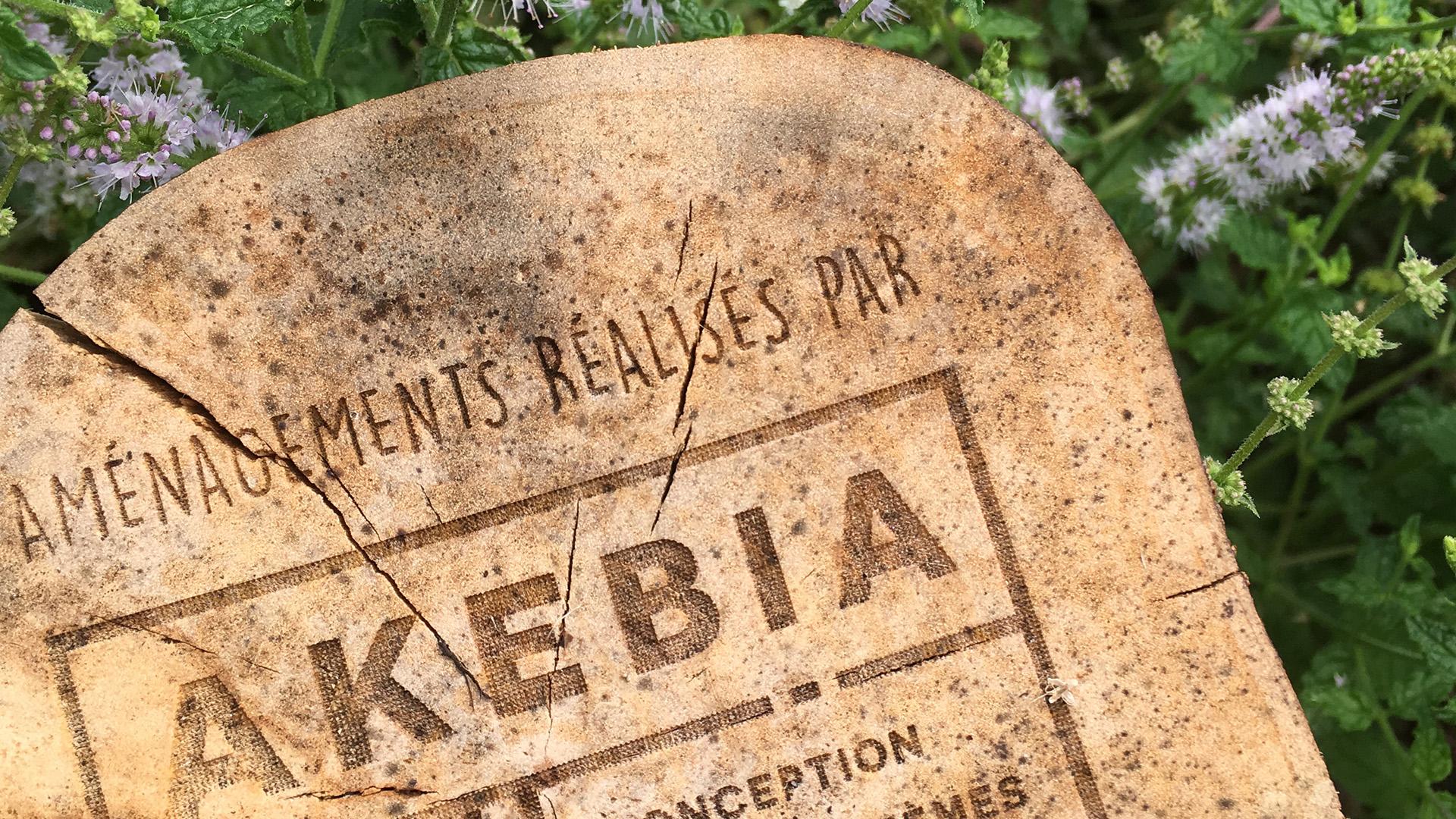 Abondance et diversité au Potager d'AKEBIA