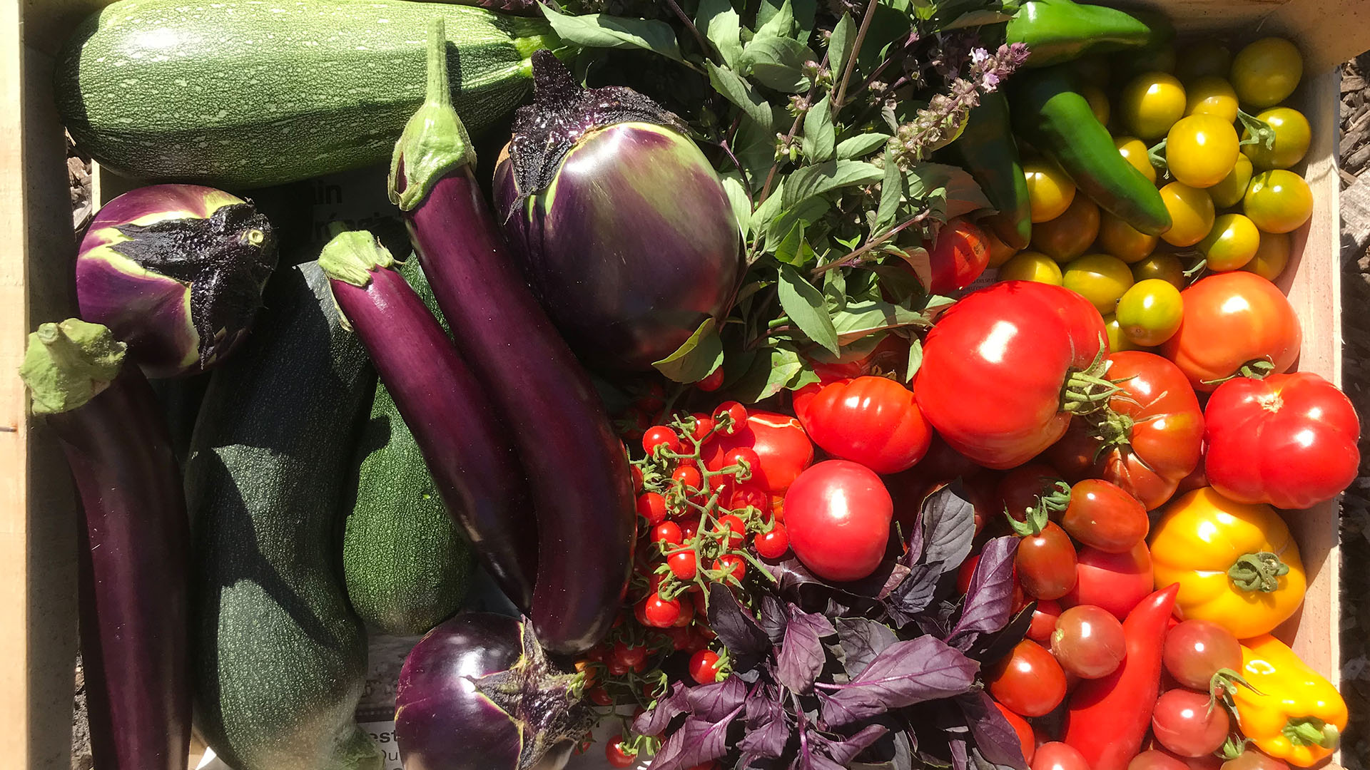 Tomates, aubergines, courgettes…