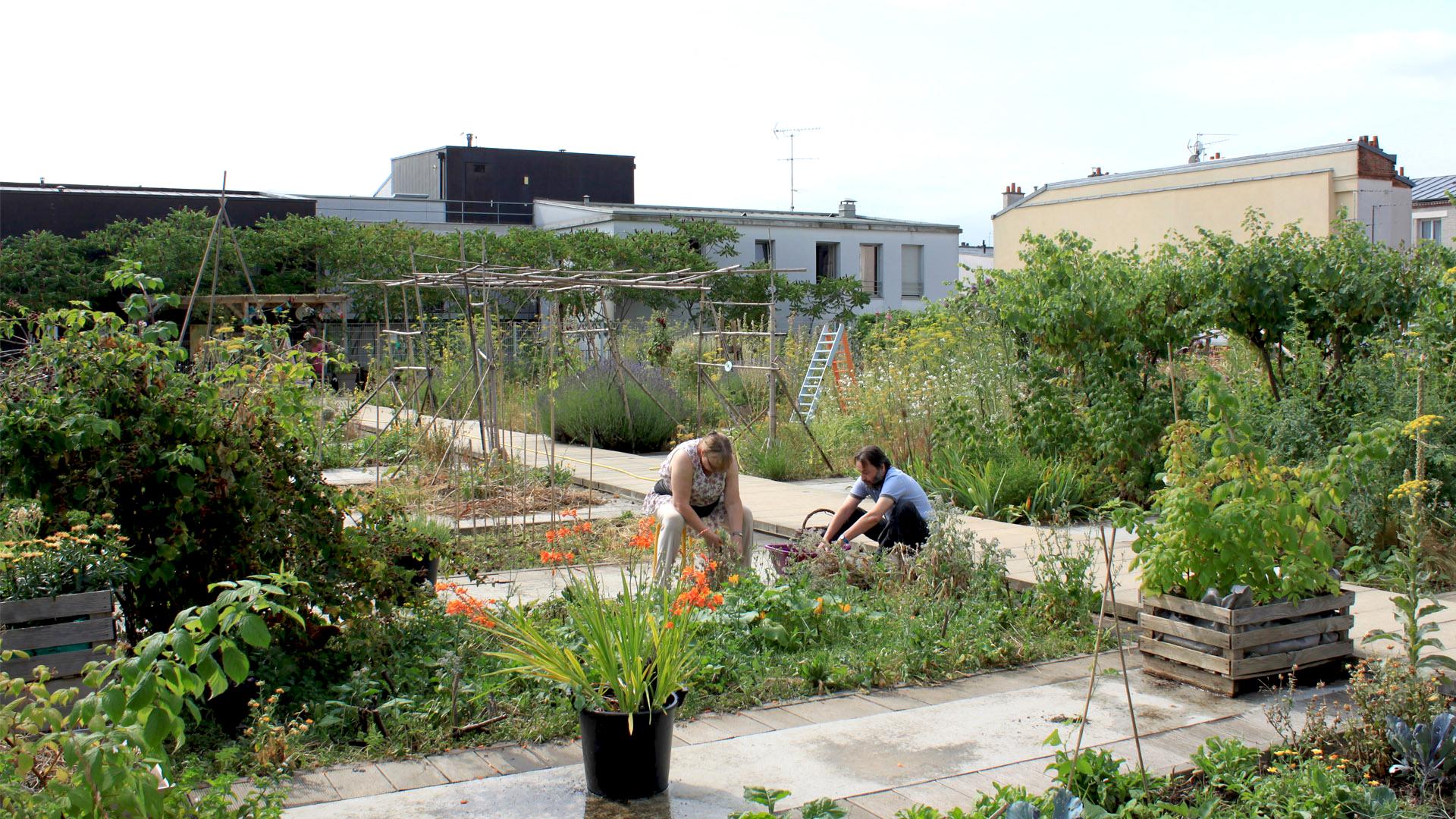 Un jardin partag sur les toits paris xx me akebia for Jardin des voix 2016