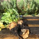 Début de chantier : création d'un potager partagé à Pessac
