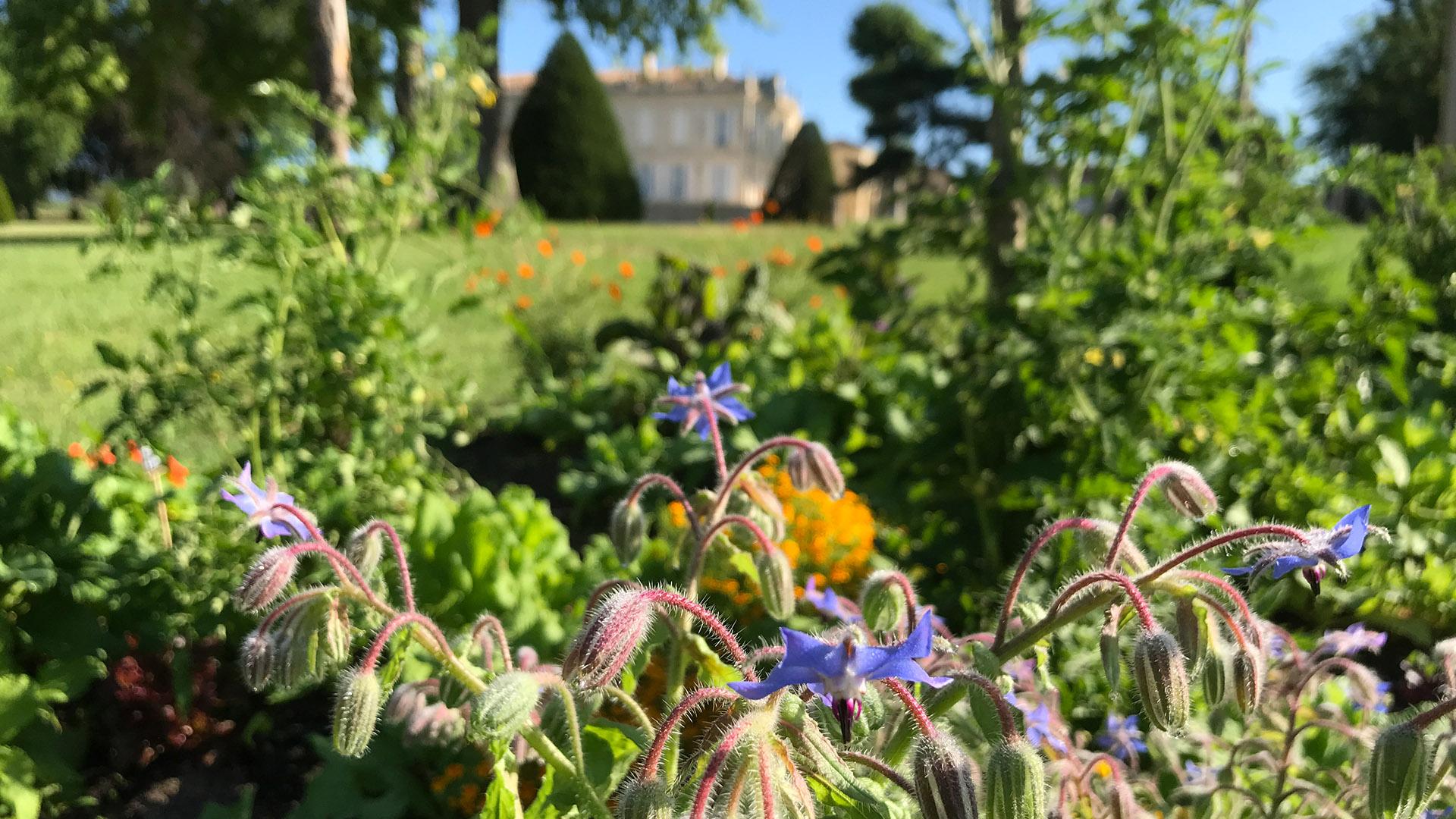 Entretien du potager du Château de la Dauphine