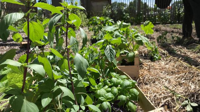 C'est l'heure de planter les légumes d'été !