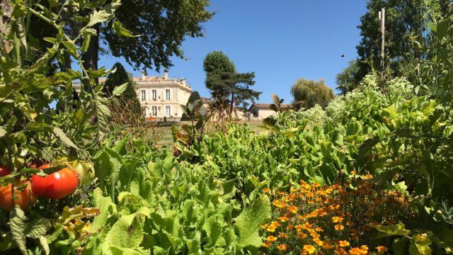Encore une belle récolte au potager du Château de la Dauphine !